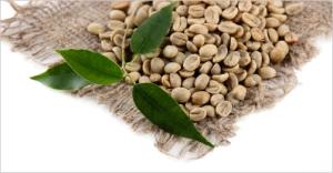 net beans border
